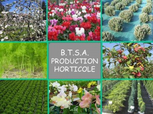 BTS production horticole