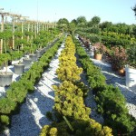 voyage en Italie etudiants BTS production horticole lycee La Cadene
