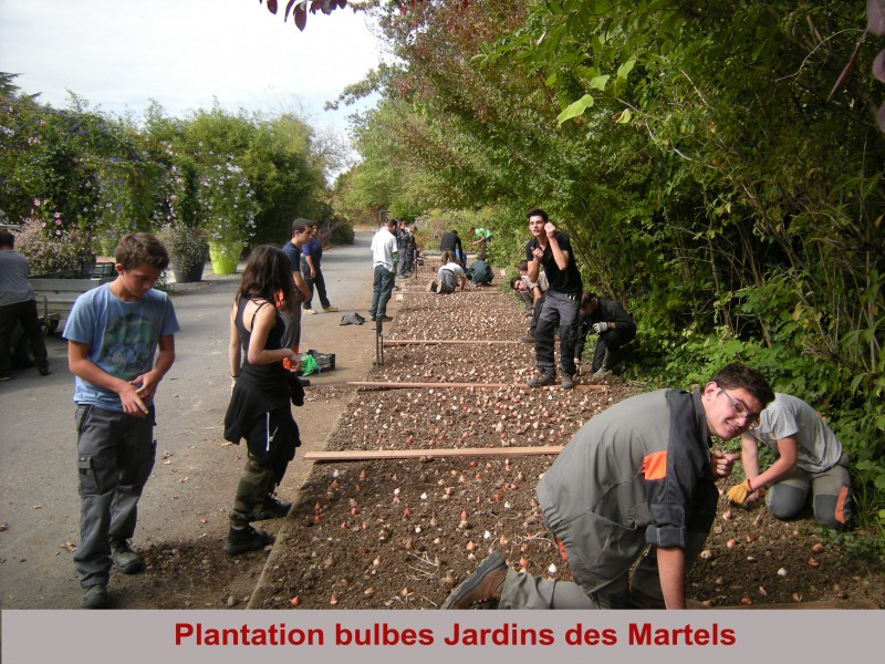 copie-de-plantation-bulbes-tulipes-jardin-des-martels-12-10-2015-copie