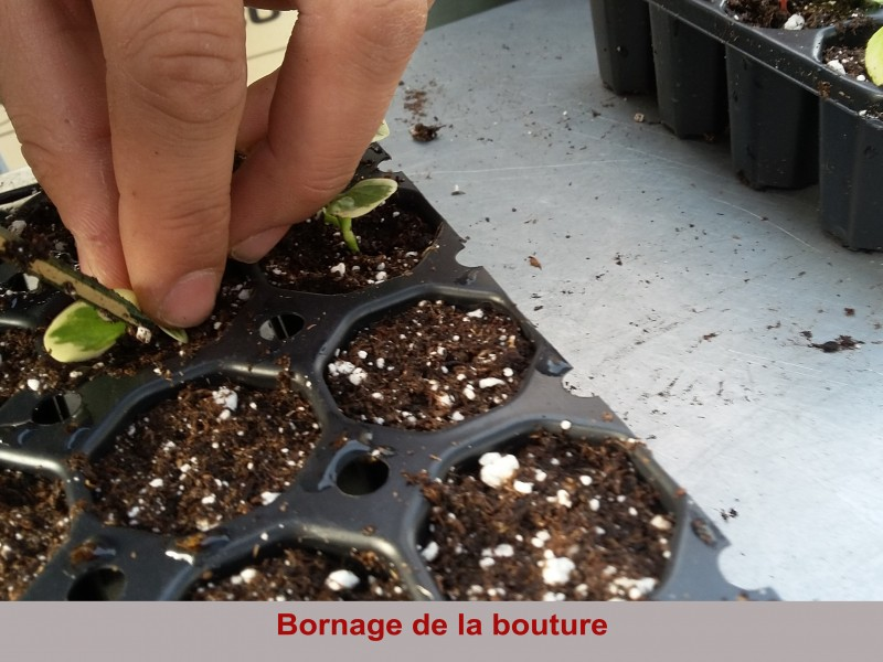 formations horticulture lyc e technologique saint fran ois la cad ne. Black Bedroom Furniture Sets. Home Design Ideas