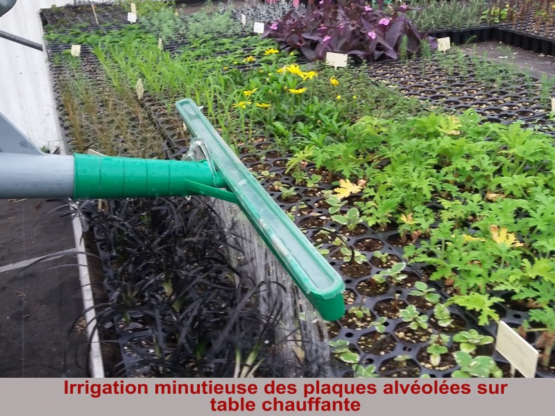 irrigation-minutieuse