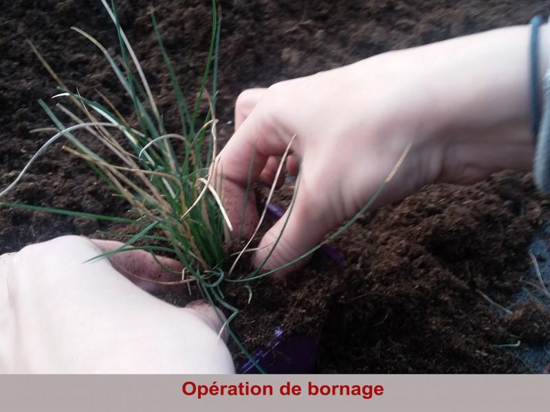 operation-de-bornage