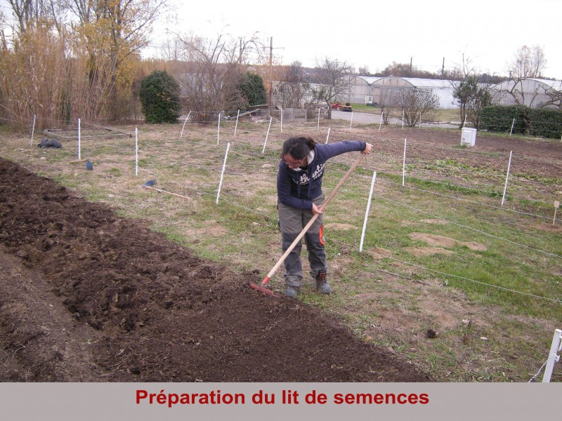 preparation-du-lit-de-semences