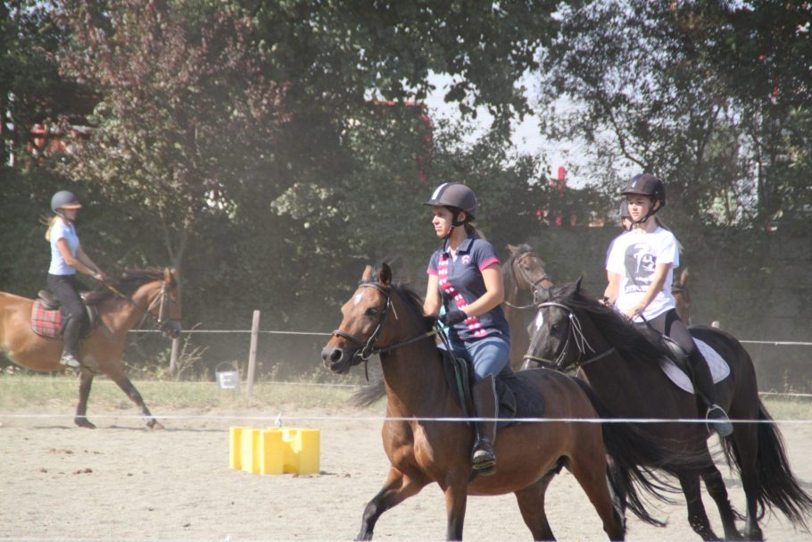 option hippologie, equitation (6)