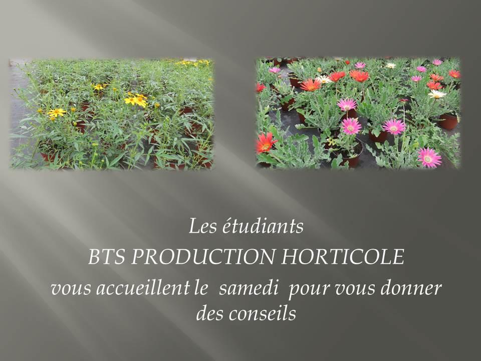 plants- BTS production horticole 2019 (1)