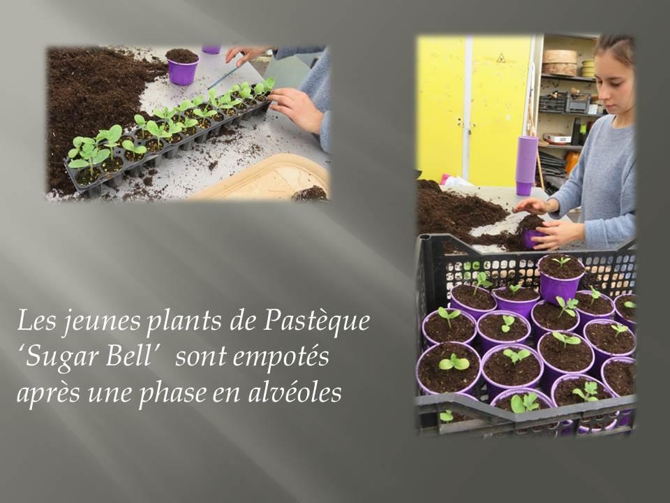 plants- BTS production horticole 2019 (3)