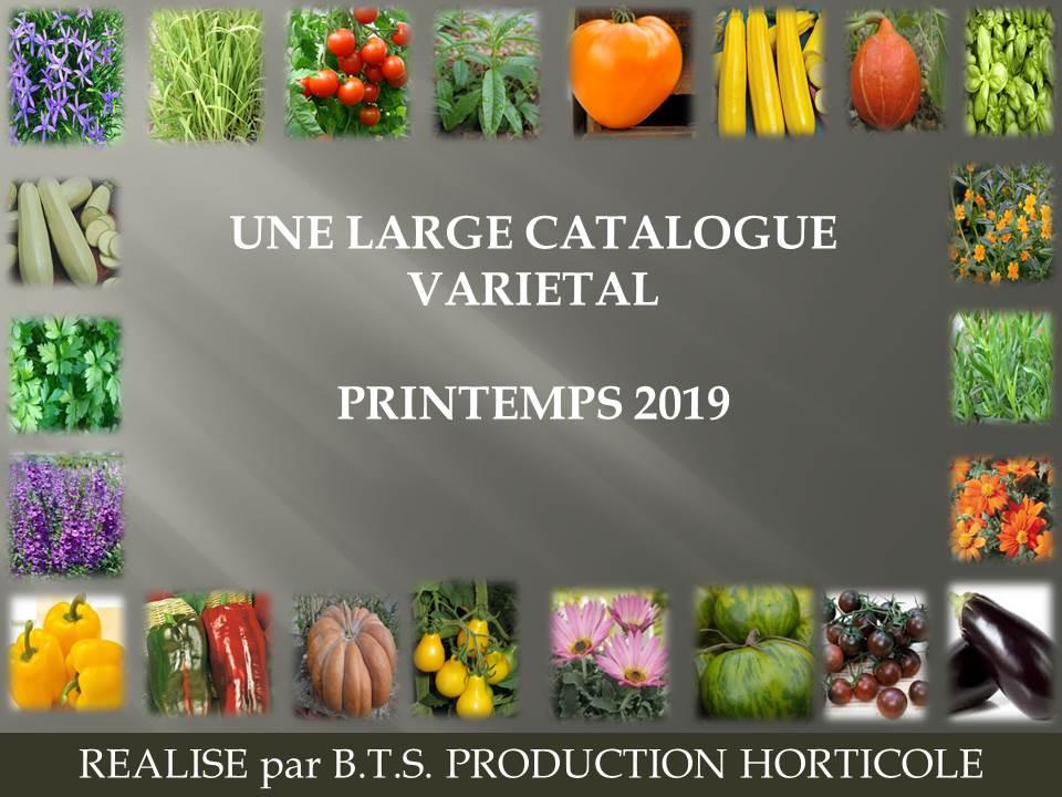 plants- BTS production horticole 2019 (7)
