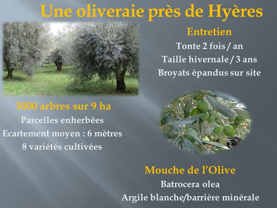 voyage d'étude bts production horticole-hyere (12)