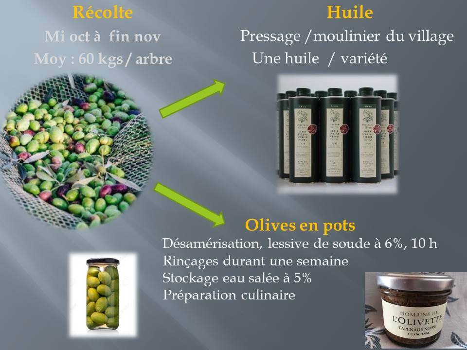 voyage d'étude bts production horticole-hyere (13)
