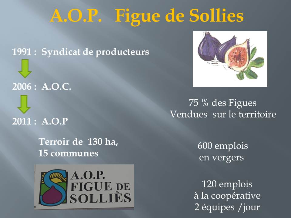 voyage d'étude bts production horticole-hyere (3)