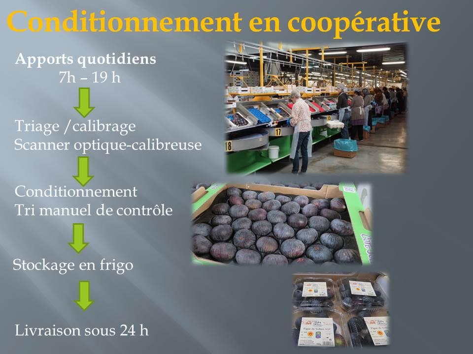 voyage d'étude bts production horticole-hyere (4)