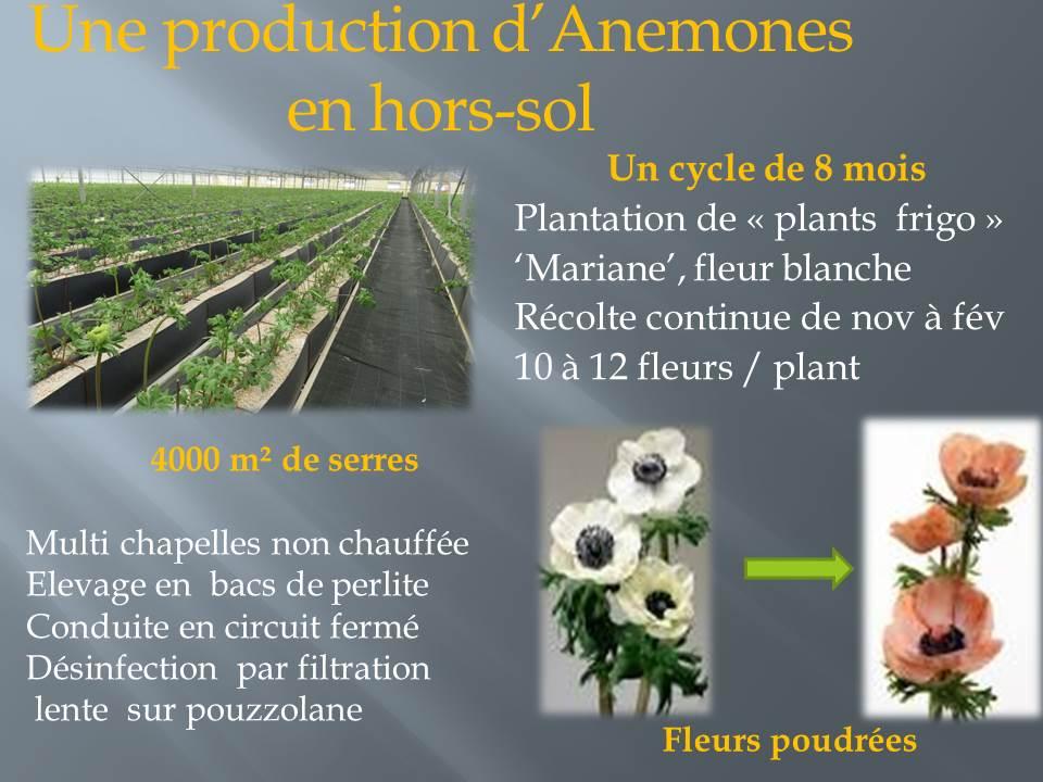 voyage d'étude bts production horticole-hyere (5)