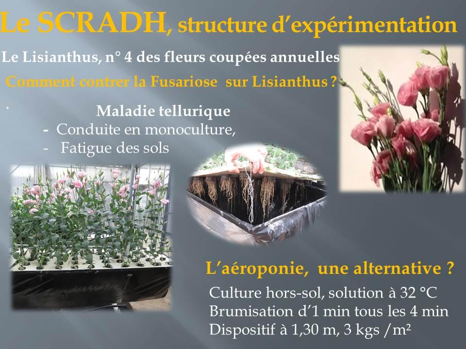 voyage d'étude bts production horticole-hyere (8)